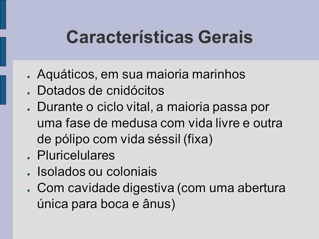 Características Gerais Aquáticos, em sua maioria marinhos Aquáticos, em sua maioria marinhos Dotados de cnidócitos Dotados de cnidócitos Durante o cic