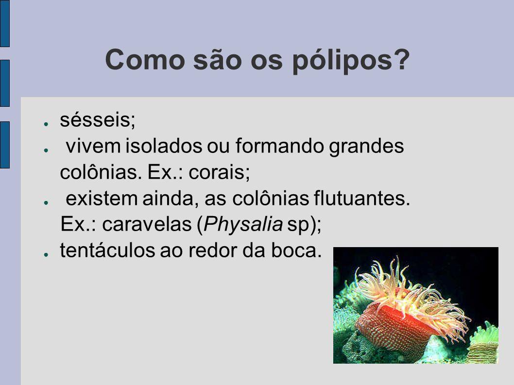 Como são os pólipos? sésseis; vivem isolados ou formando grandes colônias. Ex.: corais; existem ainda, as colônias flutuantes. Ex.: caravelas (Physali