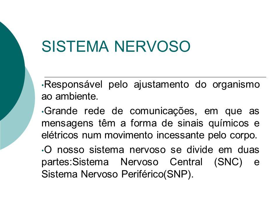 Proteção do Sistema Nervoso Central Óssea: Caixa Craniana, Coluna Vertebral Conjuntiva: Meninges Líquida: Líquor