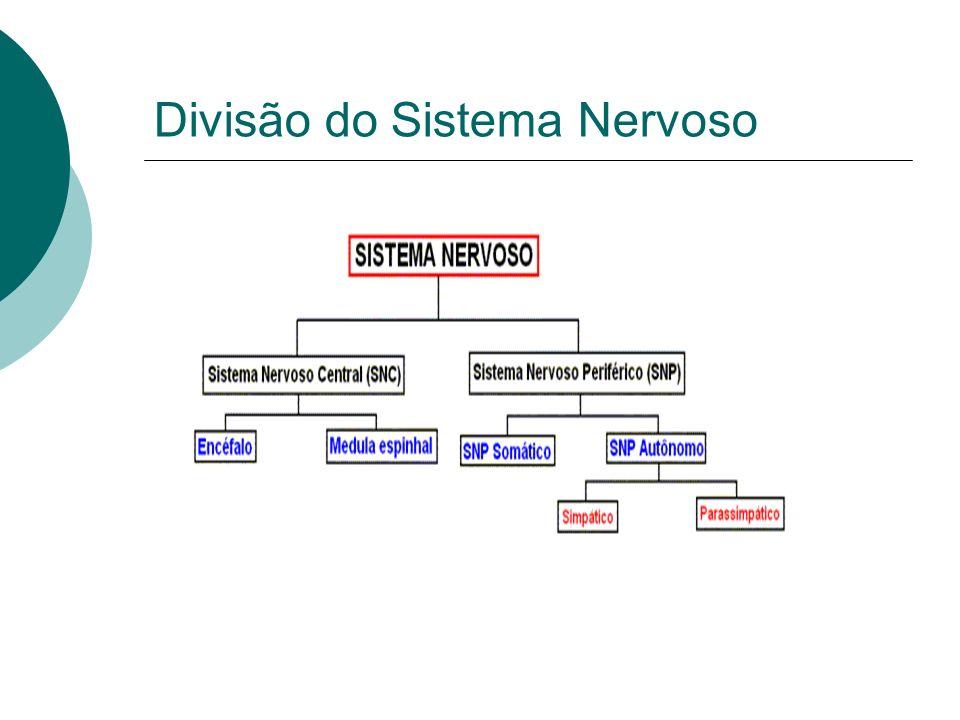 SNC: Recebe, analisa, e integra informações.