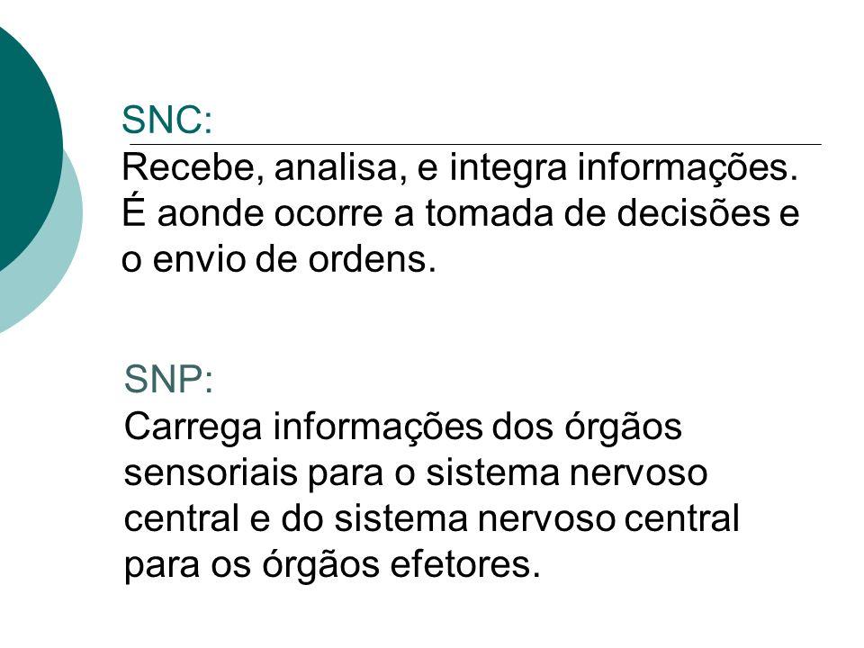 Sistema Nervoso Central Capacidade de receber, transmitir, elaborar e armazenar informações.
