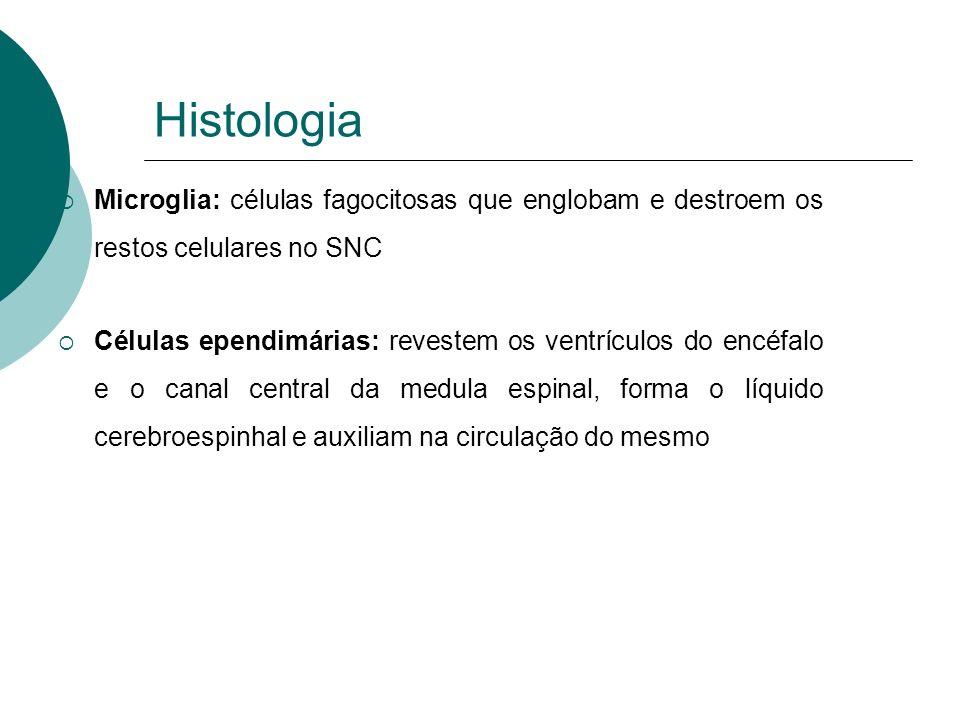 Córtex Cerebral Lobos: Frontal Parietal Temporal Occipital