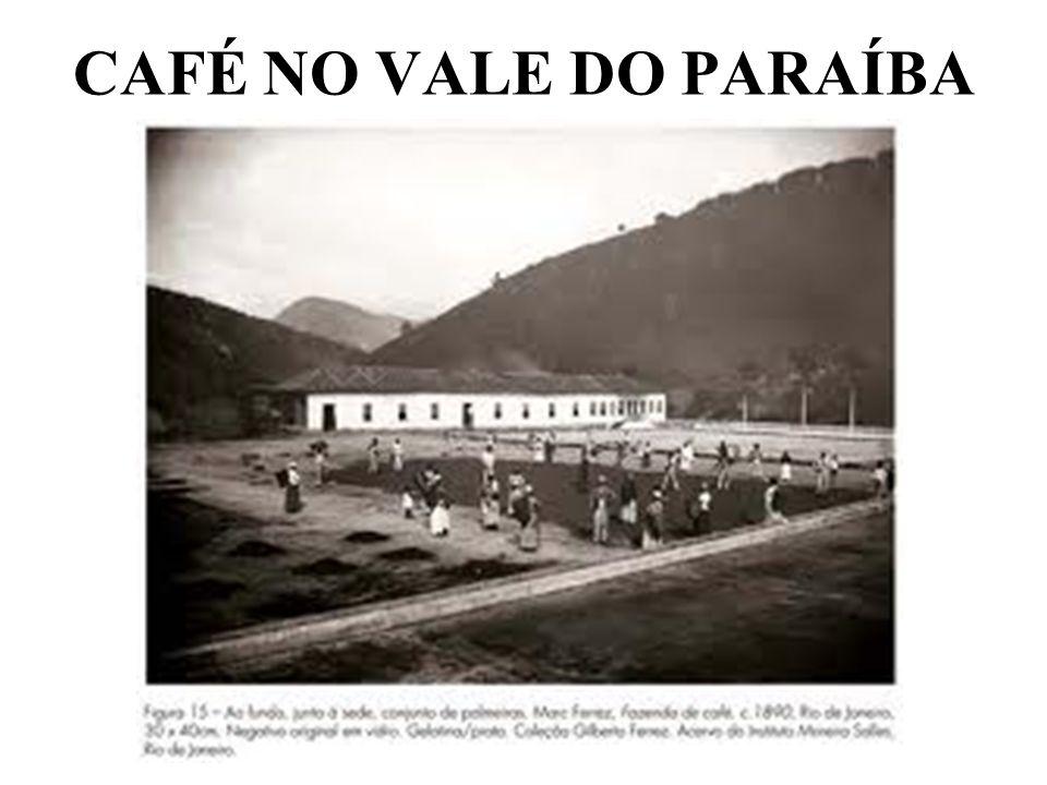 CAFÉ NO VALE DO PARAÍBA
