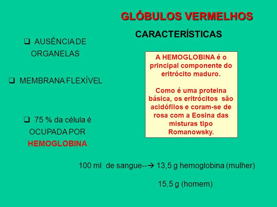 GLÓBULOS VERMELHOS CARACTERÍSTICAS AUSÊNCIA DE ORGANELAS MEMBRANA FLEXÍVEL 75 % da célula é OCUPADA POR HEMOGLOBINA A HEMOGLOBINA é o principal compon