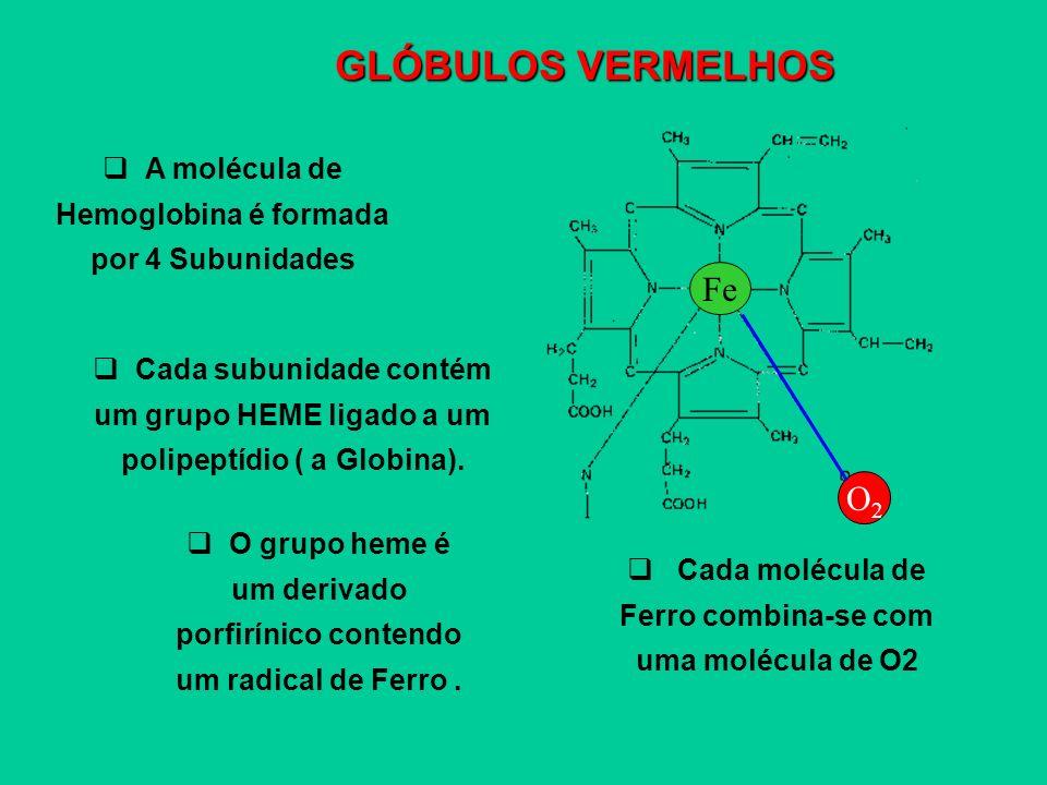 GLÓBULOS VERMELHOS A molécula de Hemoglobina é formada por 4 Subunidades Cada subunidade contém um grupo HEME ligado a um polipeptídio ( a Globina). O