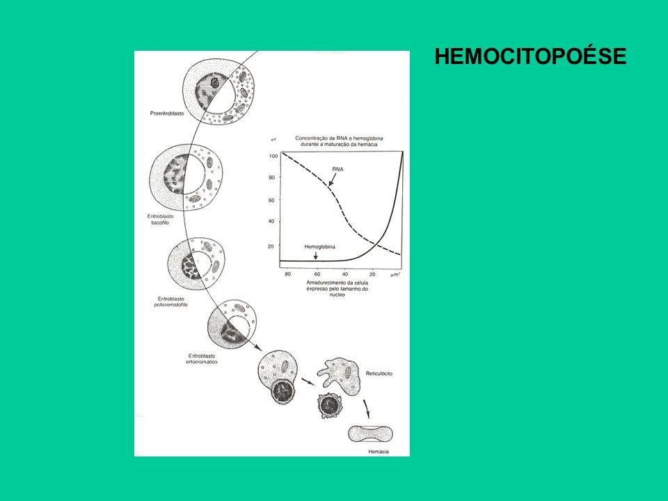 HEMOCITOPOÉSE