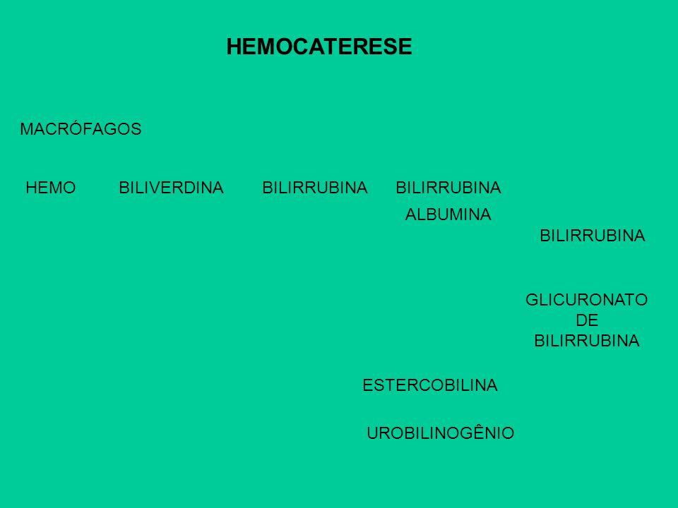 HEMOCATERESE MACRÓFAGOS HEMOBILIVERDINABILIRRUBINA ALBUMINA BILIRRUBINA GLICURONATO DE BILIRRUBINA UROBILINOGÊNIO ESTERCOBILINA