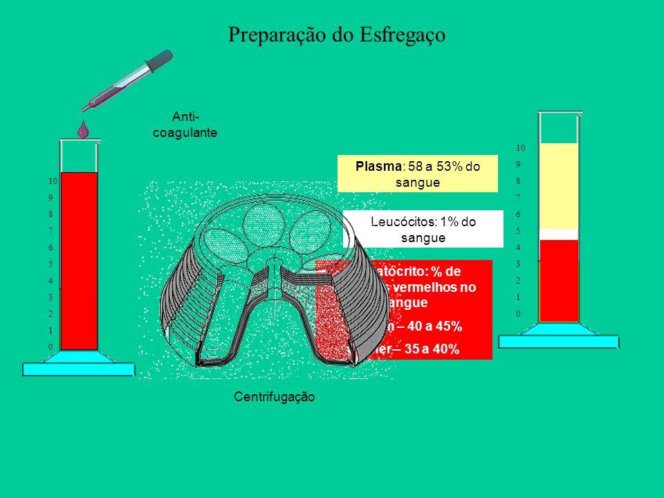 Preparação do Esfregaço 10 9 8 7 6 5 4 3 2 1 0 10 9 8 7 6 5 4 3 2 1 0 Anti- coagulante Hematócrito: % de Glóbulos vermelhos no sangue Homem – 40 a 45%
