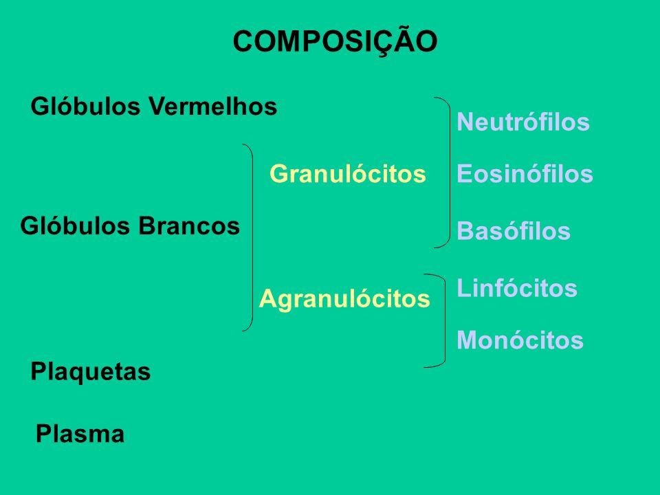 COMPOSIÇÃO Glóbulos Vermelhos Plaquetas Glóbulos Brancos Plasma Granulócitos Agranulócitos Neutrófilos Eosinófilos Basófilos Linfócitos Monócitos