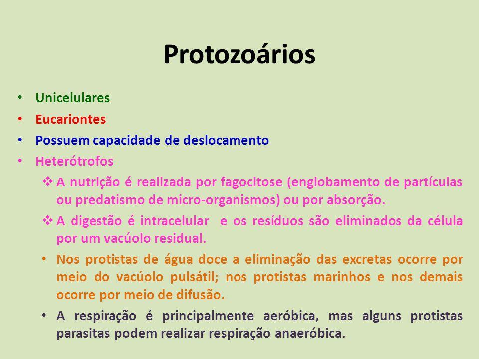 Classificação dos Protozoários A classificação dos protozoários é muito complexa e vem mudando muito na última década.