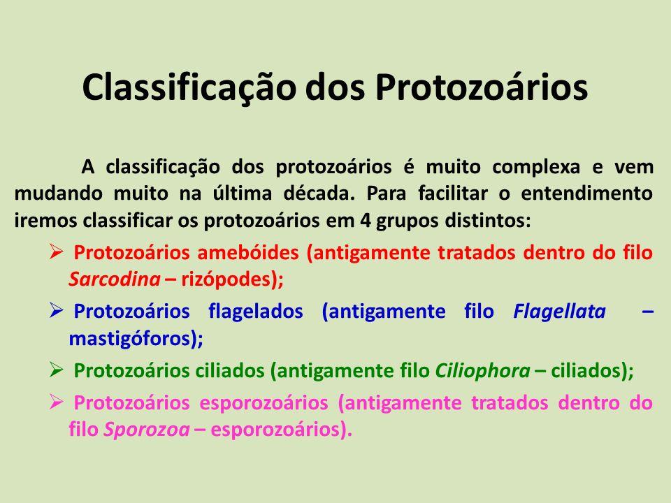 Classificação dos Protozoários A classificação dos protozoários é muito complexa e vem mudando muito na última década. Para facilitar o entendimento i
