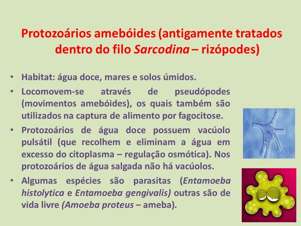 Protozoários amebóides (antigamente tratados dentro do filo Sarcodina – rizópodes) Habitat: água doce, mares e solos úmidos. Locomovem-se através de p
