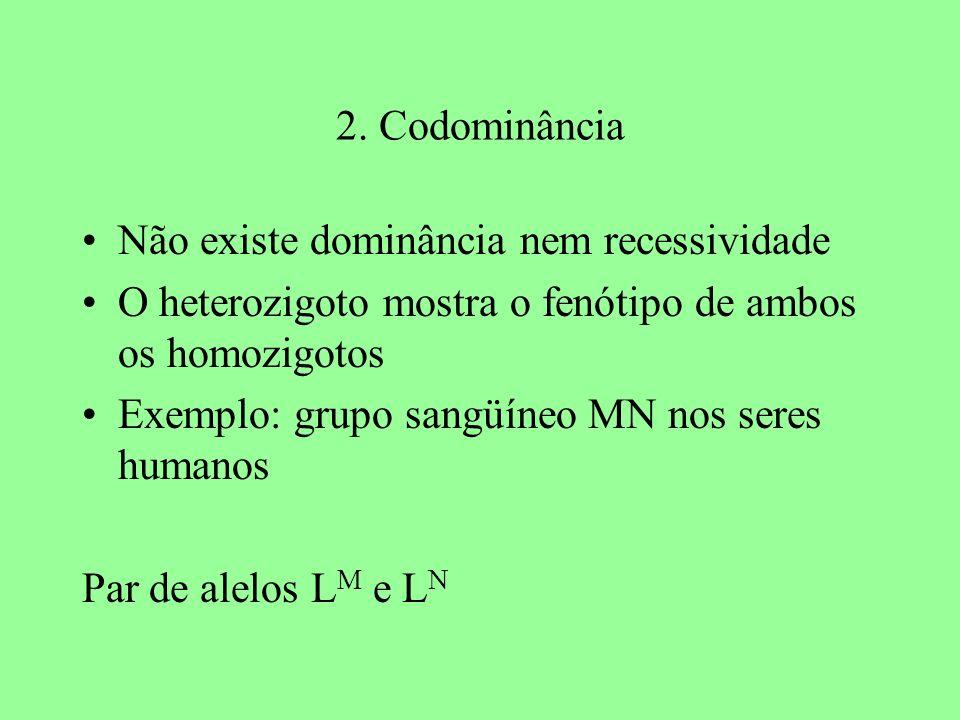 2. Codominância Não existe dominância nem recessividade O heterozigoto mostra o fenótipo de ambos os homozigotos Exemplo: grupo sangüíneo MN nos seres