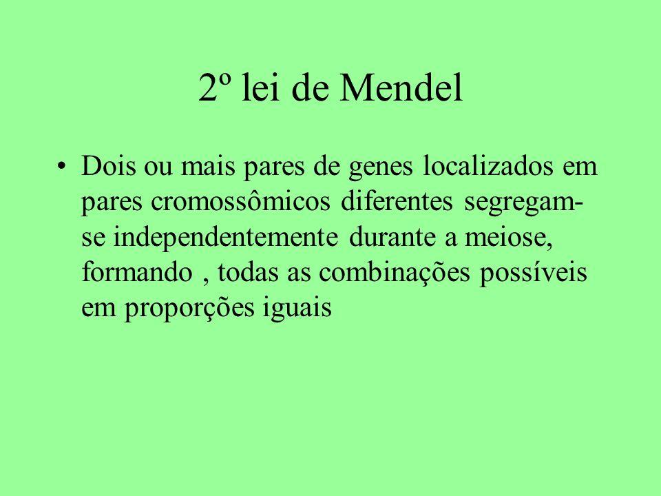 2º lei de Mendel Dois ou mais pares de genes localizados em pares cromossômicos diferentes segregam- se independentemente durante a meiose, formando, todas as combinações possíveis em proporções iguais