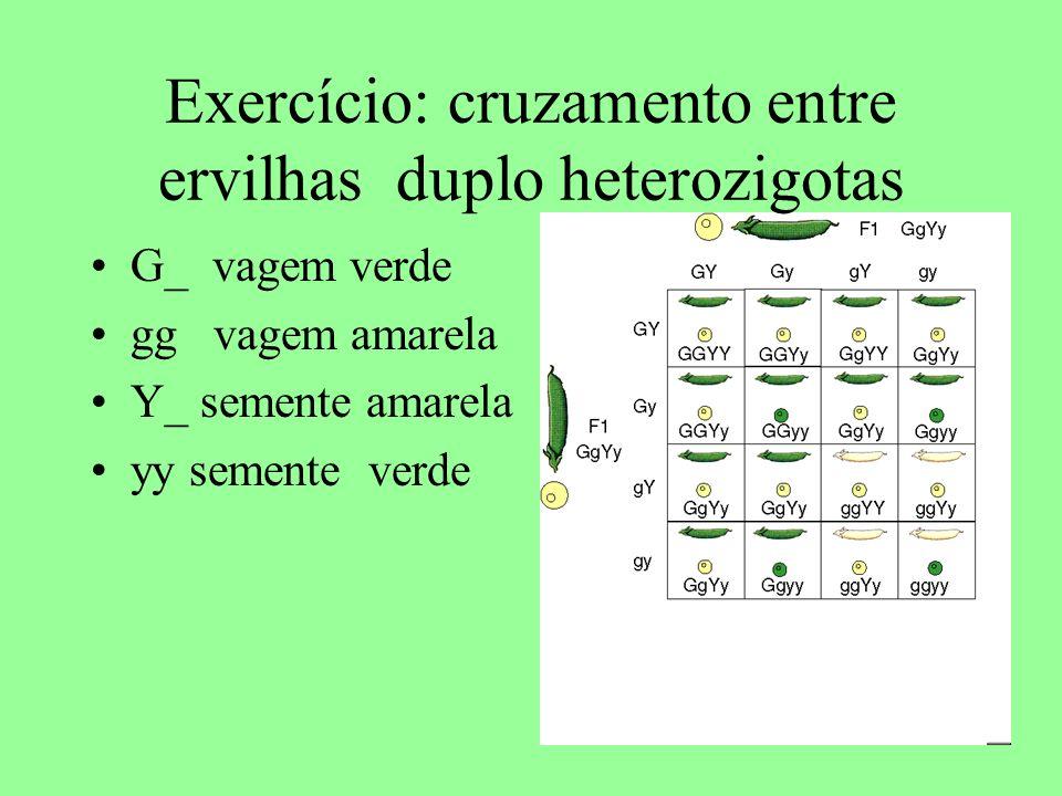Exercício: cruzamento entre ervilhas duplo heterozigotas G_ vagem verde gg vagem amarela Y_ semente amarela yy semente verde