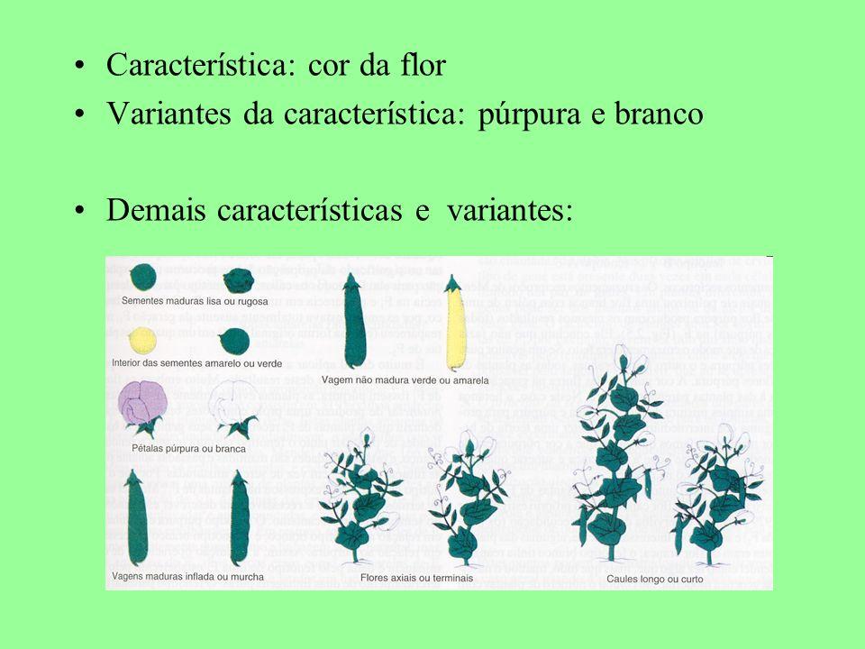 Característica: cor da flor Variantes da característica: púrpura e branco Demais características e variantes:
