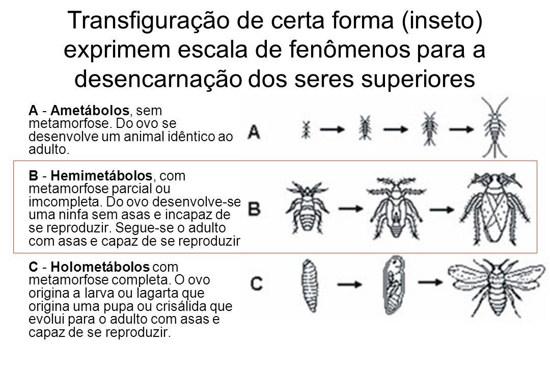 Transfiguração de certa forma (inseto) exprimem escala de fenômenos para a desencarnação dos seres superiores A - Ametábolos, sem metamorfose. Do ovo