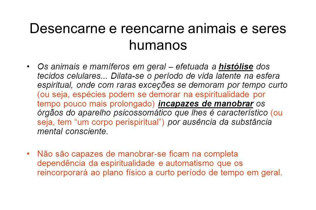 Desencarne e reencarne animais e seres humanos Os animais e mamíferos em geral – efetuada a histólise dos tecidos celulares... Dilata-se o período de