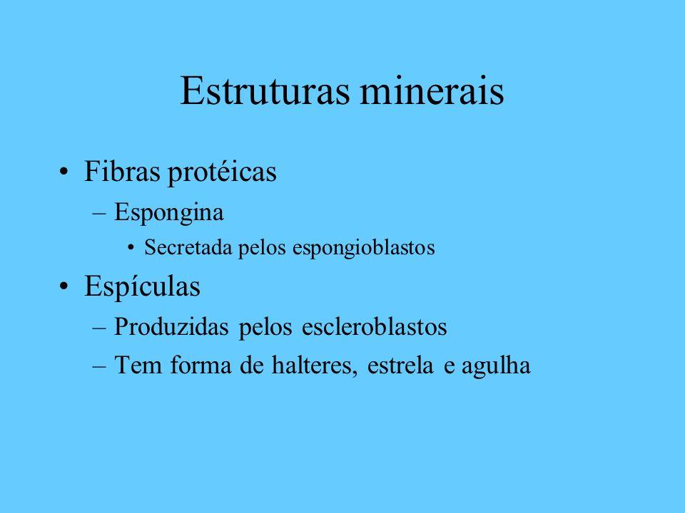 Estruturas minerais Fibras protéicas –Espongina Secretada pelos espongioblastos Espículas –Produzidas pelos escleroblastos –Tem forma de halteres, estrela e agulha