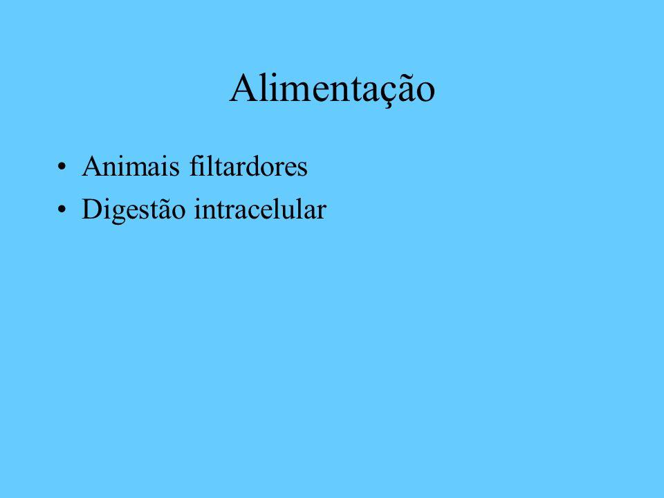 Alimentação Animais filtardores Digestão intracelular