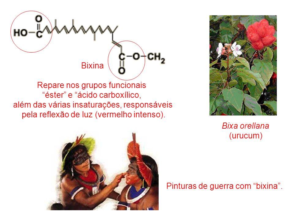 Bixa orellana (urucum) Bixina Repare nos grupos funcionais éster e ácido carboxílico, além das várias insaturações, responsáveis pela reflexão de luz