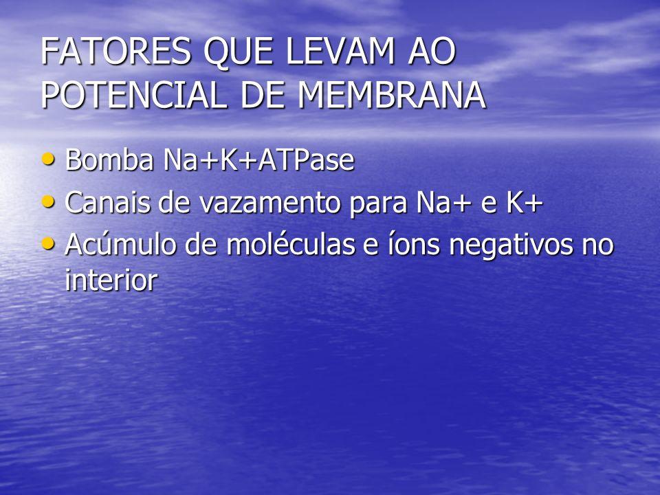 FATORES QUE LEVAM AO POTENCIAL DE MEMBRANA Bomba Na+K+ATPase Bomba Na+K+ATPase Canais de vazamento para Na+ e K+ Canais de vazamento para Na+ e K+ Acú