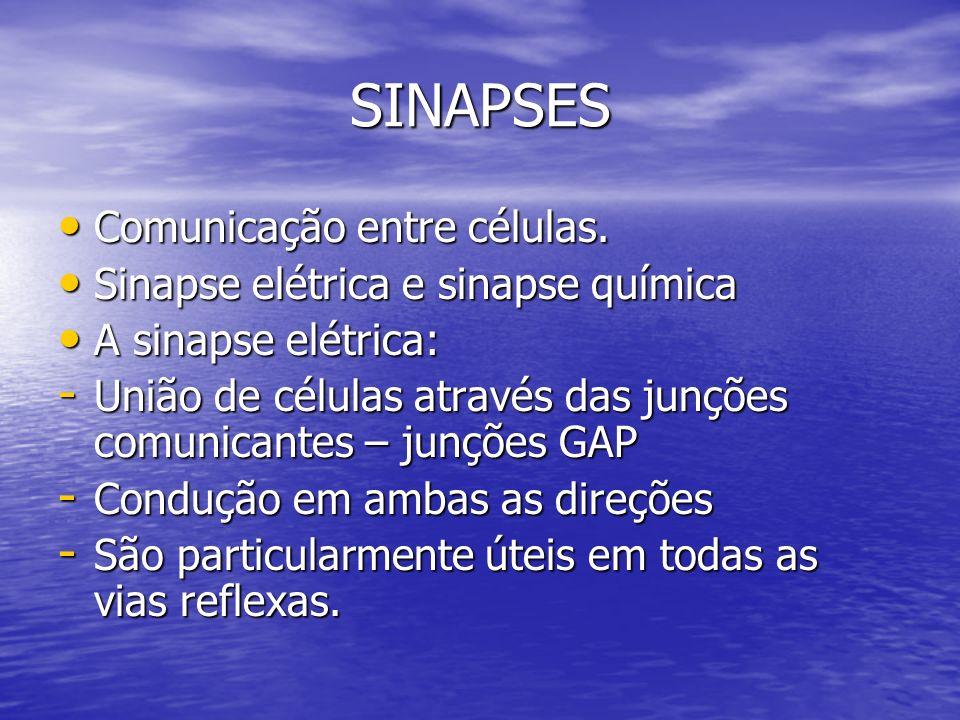 SINAPSES Comunicação entre células. Comunicação entre células. Sinapse elétrica e sinapse química Sinapse elétrica e sinapse química A sinapse elétric