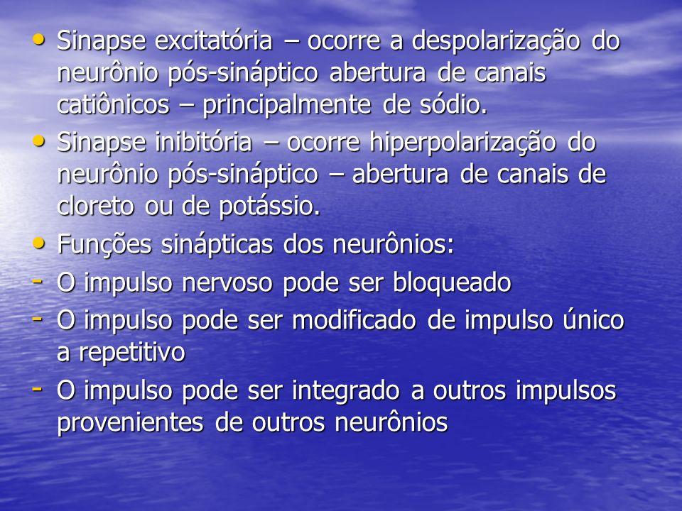 Sinapse excitatória – ocorre a despolarização do neurônio pós-sináptico abertura de canais catiônicos – principalmente de sódio. Sinapse excitatória –