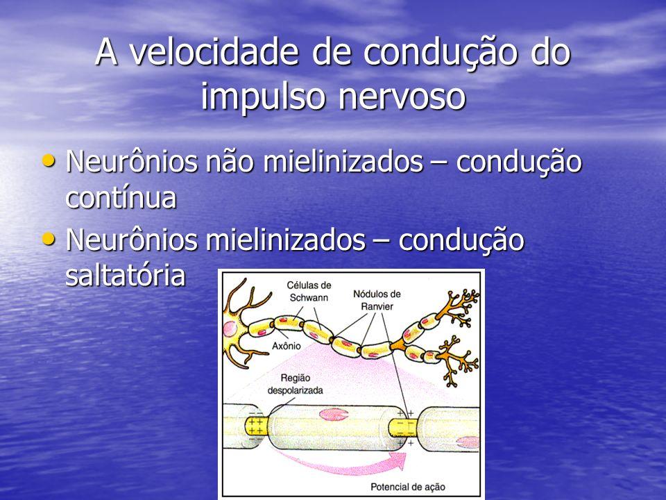 A velocidade de condução do impulso nervoso Neurônios não mielinizados – condução contínua Neurônios não mielinizados – condução contínua Neurônios mi