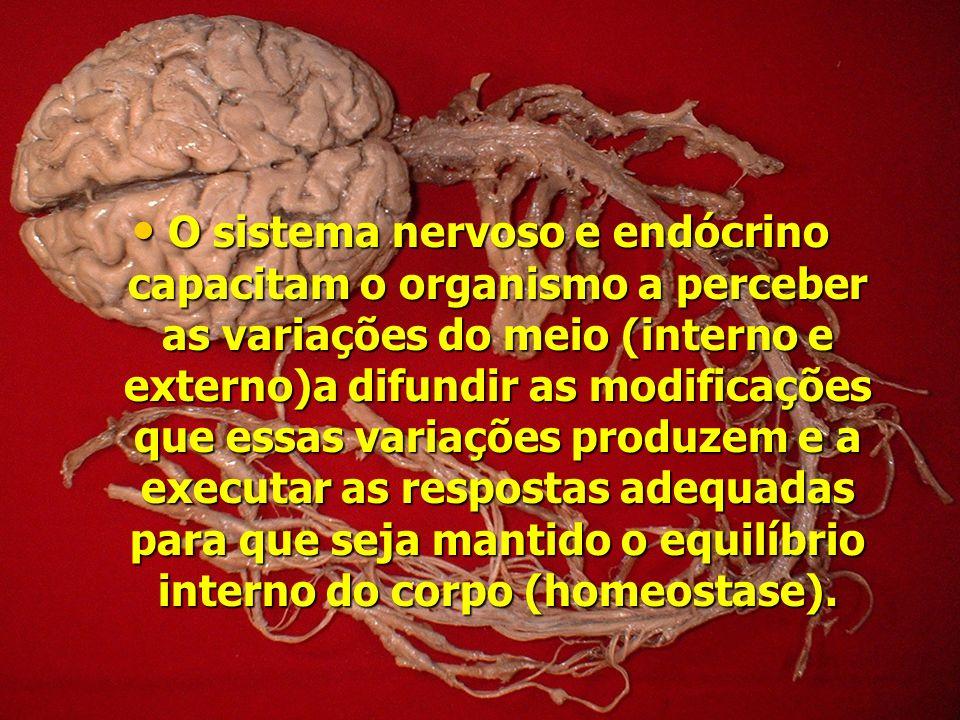 O sistema nervoso e endócrino capacitam o organismo a perceber as variações do meio (interno e externo)a difundir as modificações que essas variações