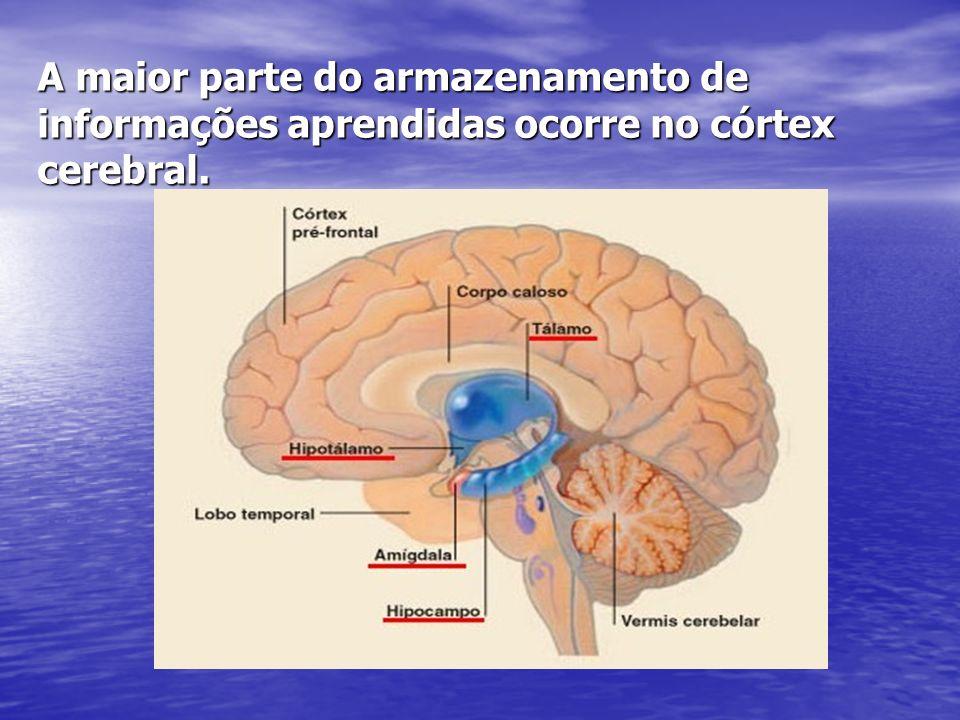 A maior parte do armazenamento de informações aprendidas ocorre no córtex cerebral.