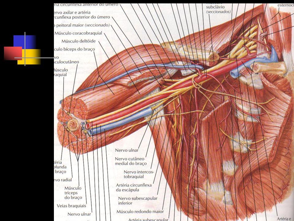 lesão cerebral fratura da clavícula e úmero osteomielite neonatal Diagnóstico Diferencial Ana Cássia Siqueira da Cunha