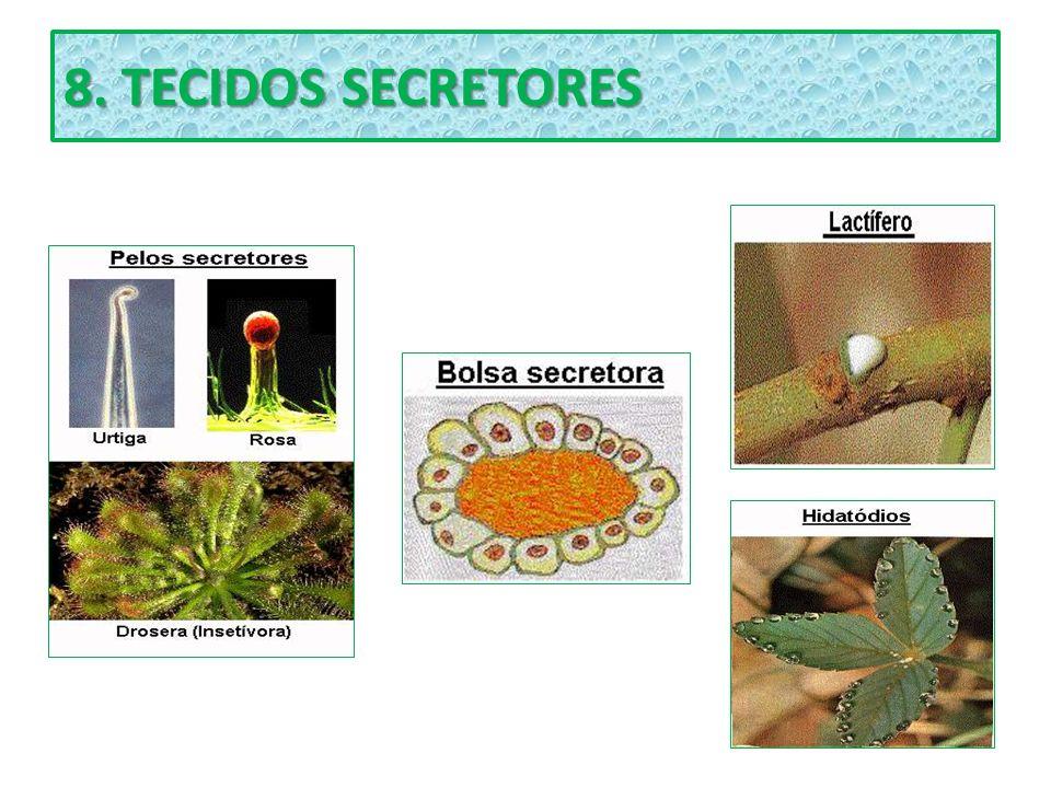 8. TECIDOS SECRETORES