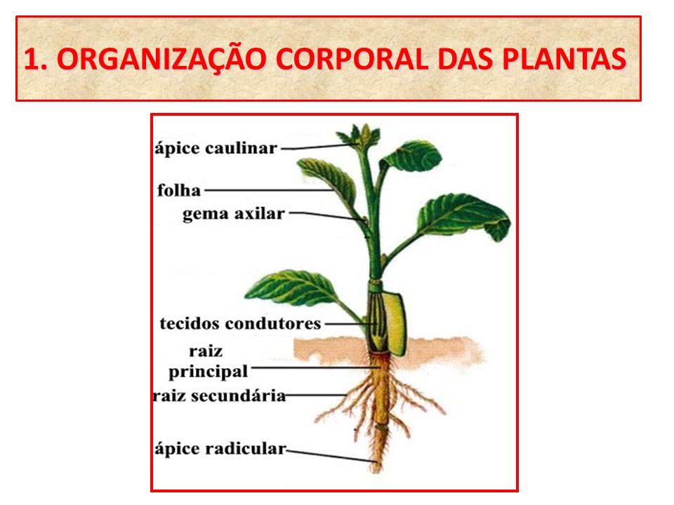 1. ORGANIZAÇÃO CORPORAL DAS PLANTAS