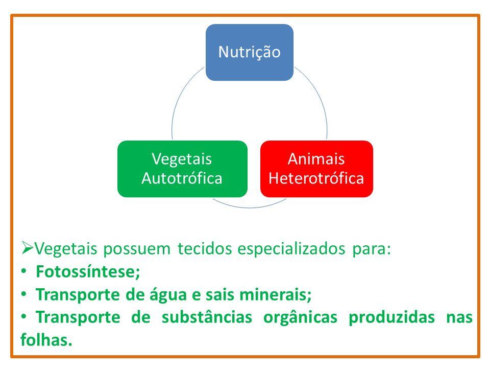 Nutrição Animais Heterotrófica Vegetais Autotrófica Vegetais possuem tecidos especializados para: Fotossíntese; Transporte de água e sais minerais; Tr
