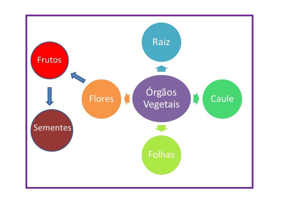 Órgãos Vegetais Raiz CauleFolhasFlores Frutos Sementes