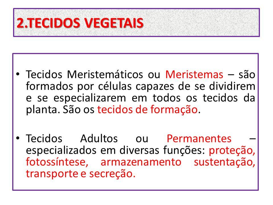 2.TECIDOS VEGETAIS Tecidos Meristemáticos ou Meristemas – são formados por células capazes de se dividirem e se especializarem em todos os tecidos da
