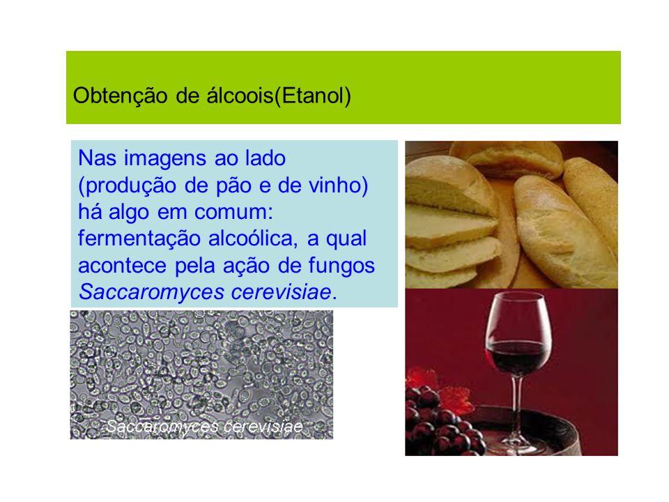Obtenção de álcoois(Etanol) Nas imagens ao lado (produção de pão e de vinho) há algo em comum: fermentação alcoólica, a qual acontece pela ação de fun