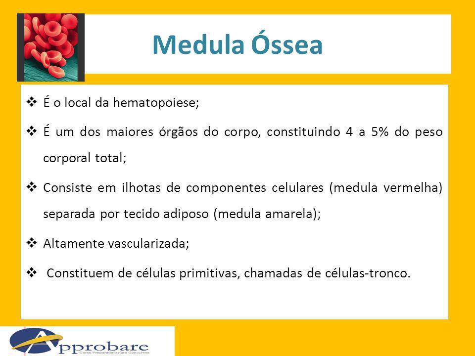Medula Óssea É o local da hematopoiese; É um dos maiores órgãos do corpo, constituindo 4 a 5% do peso corporal total; Consiste em ilhotas de component