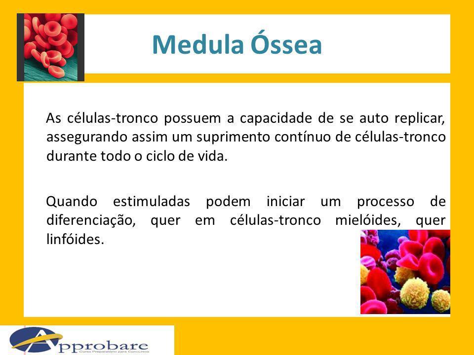 Medula Óssea As células-tronco possuem a capacidade de se auto replicar, assegurando assim um suprimento contínuo de células-tronco durante todo o cic