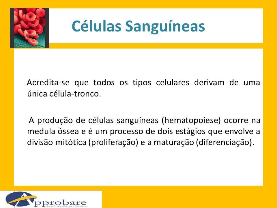 Células Sanguíneas Acredita-se que todos os tipos celulares derivam de uma única célula-tronco. A produção de células sanguíneas (hematopoiese) ocorre