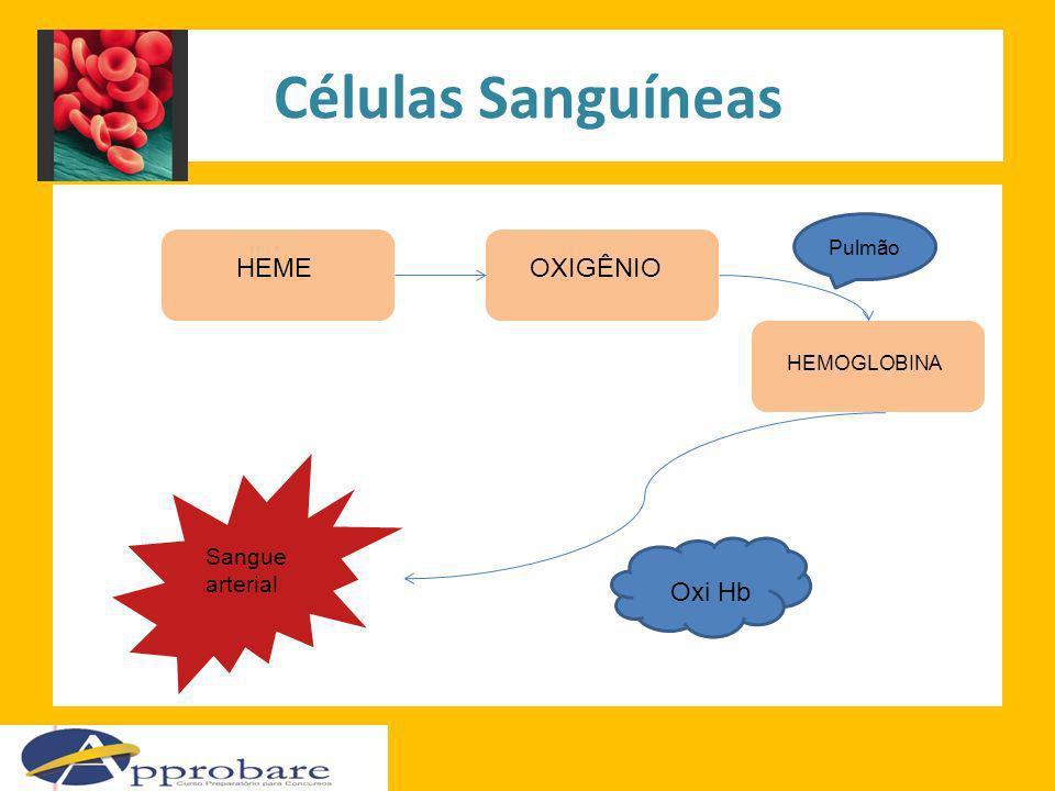 Células Sanguíneas HEMEOXIGÊNIO HEMOGLOBINA Pulmão Oxi Hb Sangue arterial