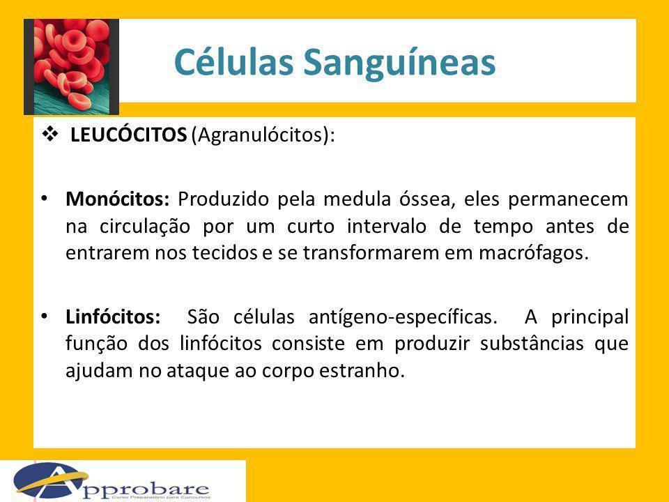 Células Sanguíneas LEUCÓCITOS (Agranulócitos): Monócitos: Produzido pela medula óssea, eles permanecem na circulação por um curto intervalo de tempo a