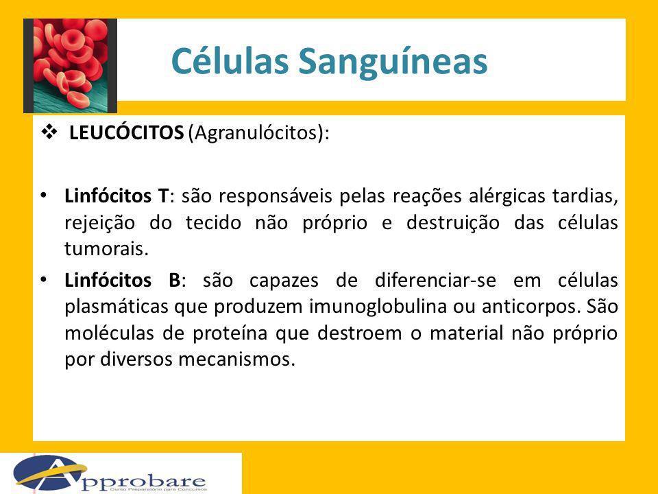 Células Sanguíneas LEUCÓCITOS (Agranulócitos): Linfócitos T: são responsáveis pelas reações alérgicas tardias, rejeição do tecido não próprio e destru