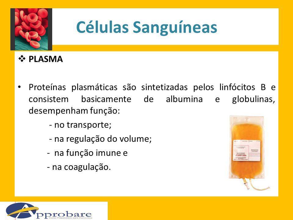 Células Sanguíneas PLASMA Proteínas plasmáticas são sintetizadas pelos linfócitos B e consistem basicamente de albumina e globulinas, desempenham funç