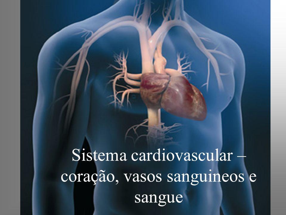 O sistema cardiovascular - Função: Levar através do sangue nutrientes, oxigênio, hormônios dentre outros para as células e eliminar produtos do metabolismo celular.