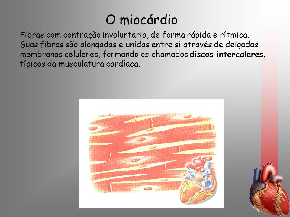 O miocárdio Fibras com contração involuntaria, de forma rápida e rítmica. Suas fibras são alongadas e unidas entre si através de delgadas membranas ce