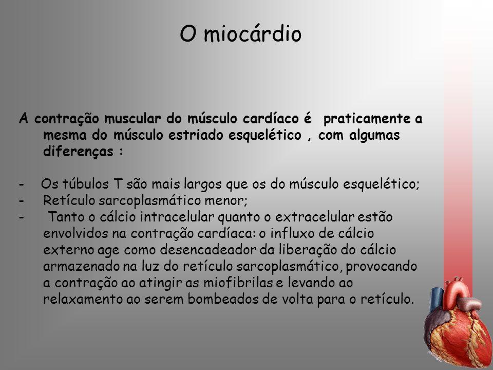 O miocárdio A contração muscular do músculo cardíaco é praticamente a mesma do músculo estriado esquelético, com algumas diferenças : - Os túbulos T s