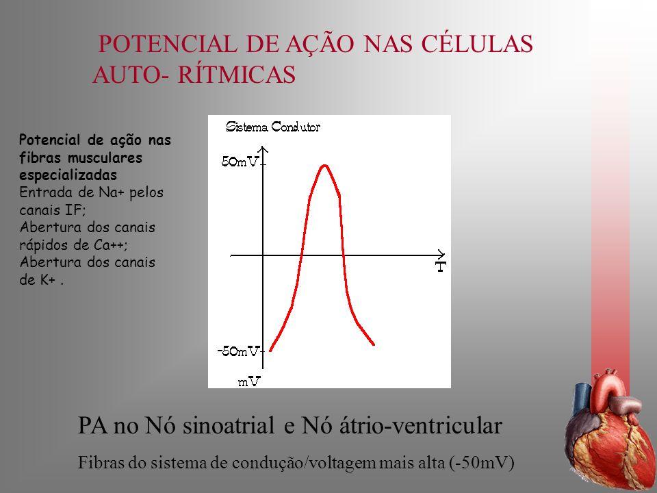 POTENCIAL DE AÇÃO NAS CÉLULAS AUTO- RÍTMICAS PA no Nó sinoatrial e Nó átrio-ventricular Fibras do sistema de condução/voltagem mais alta (-50mV) Poten