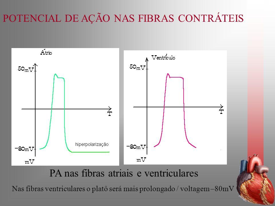 POTENCIAL DE AÇÃO NAS FIBRAS CONTRÁTEIS PA nas fibras atriais e ventriculares Nas fibras ventriculares o platô será mais prolongado / voltagem –80mV